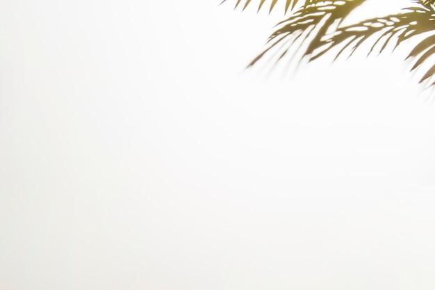 白い背景の上の影を葉します。 無料写真
