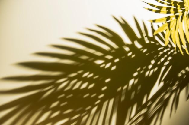 背景に日光の下で緑の葉の暗い影 無料写真