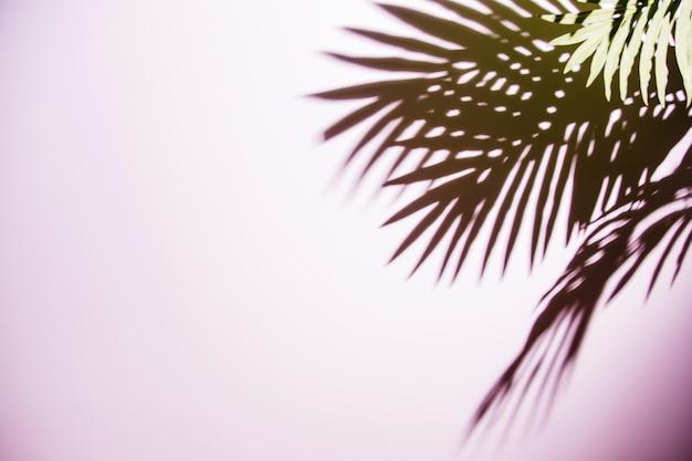 緑のヤシの葉がピンクの背景に影 無料写真