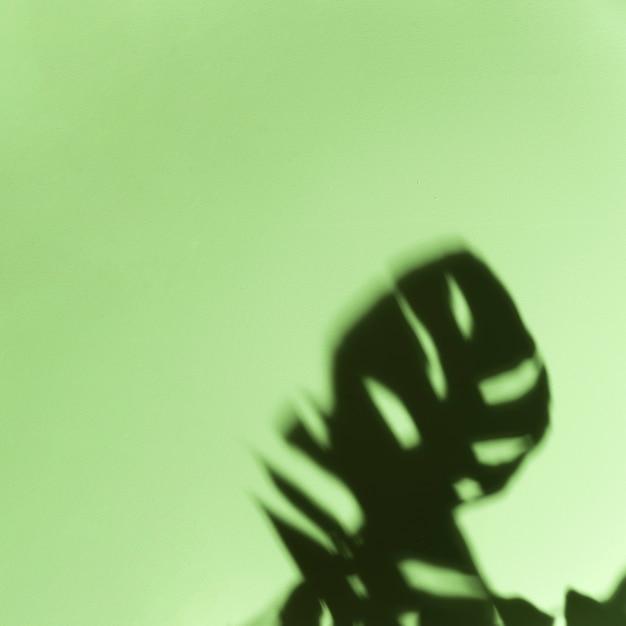 Черные темные листья монстера на мятно-зеленом фоне Бесплатные Фотографии