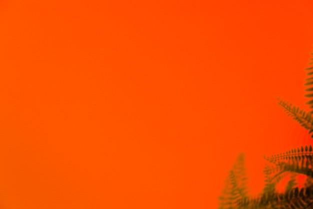 オレンジ色の背景に緑のシダの影 無料写真