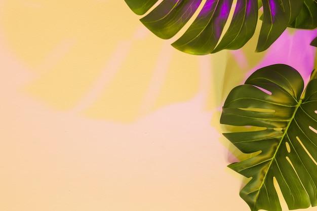 ベージュの背景の上のモンステラの葉に黄色とピンク色の影 無料写真