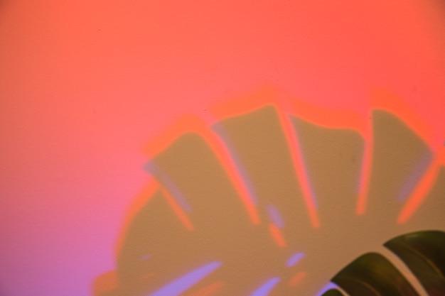 モンステラは赤の背景に影を残します 無料写真