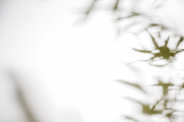白い背景にぼやけた葉影 無料写真