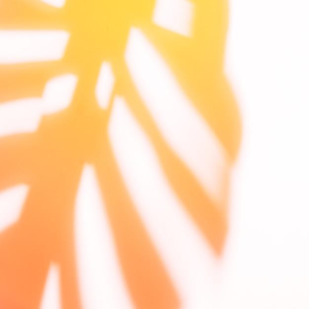 白地に赤とオレンジのモンステラ影 無料写真