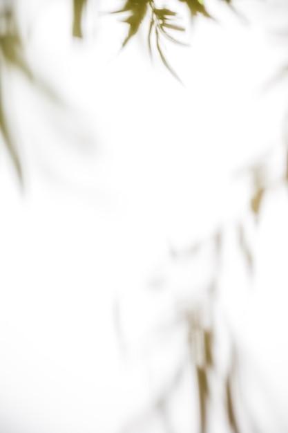 白い背景の上の自然の葉 無料写真