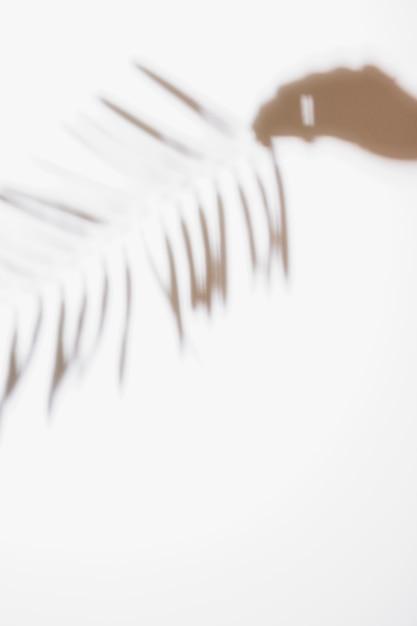 白い背景で隔離のヤシの葉を持っている人の手のシルエット 無料写真