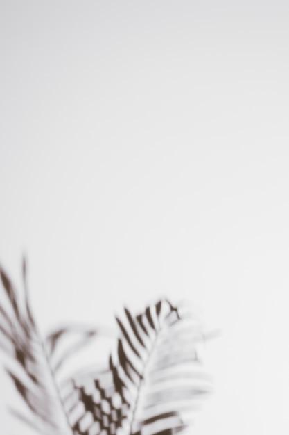 ヤシの影が白い背景に葉します。 無料写真