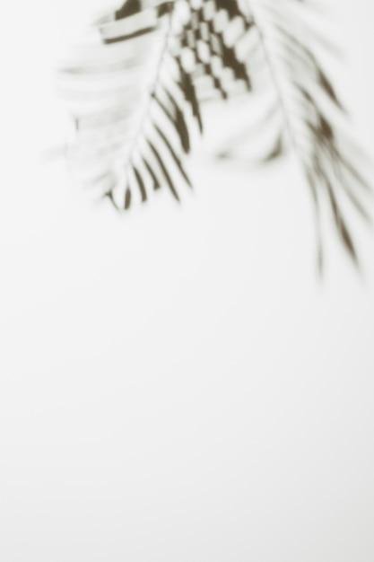 ぼやけたヤシの葉の白い背景で隔離 無料写真