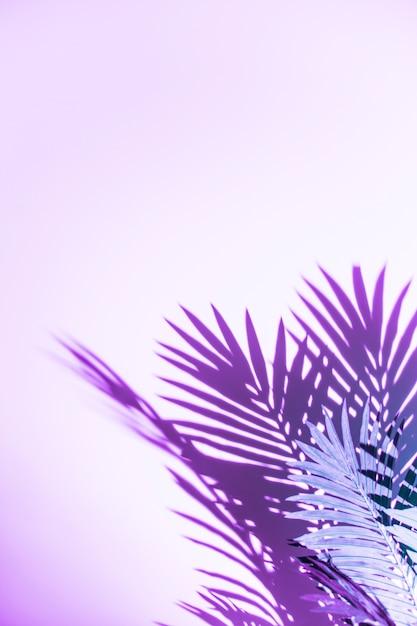ヤシの葉の紫色の背景に分離された影 無料写真