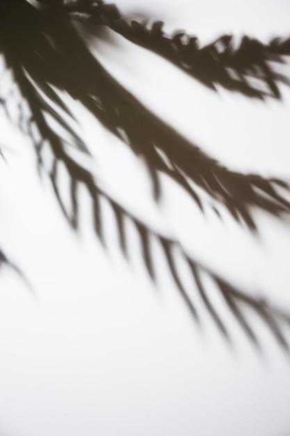 白い背景で隔離のヤシの葉の影 無料写真