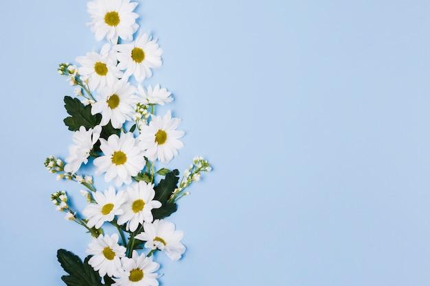 装飾的なデイジーの花 無料写真