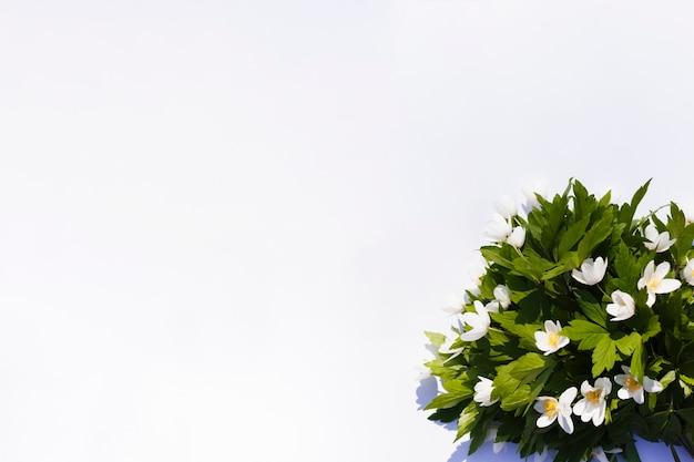 屋外の花 無料写真