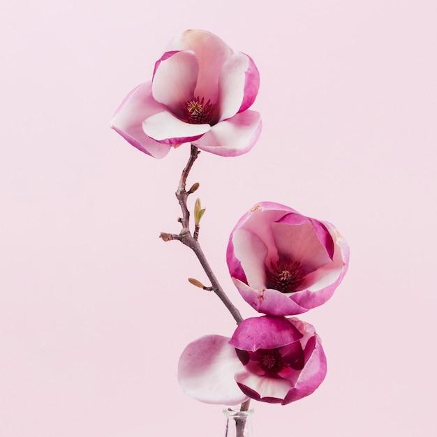 Декоративные цветы Бесплатные Фотографии