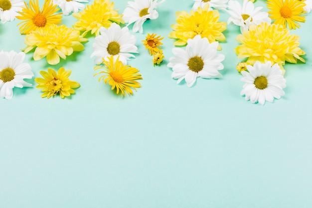 Декоративные цветы ромашки Бесплатные Фотографии
