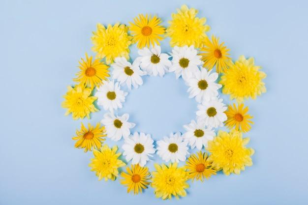 Цветы ромашки в круглой форме Бесплатные Фотографии