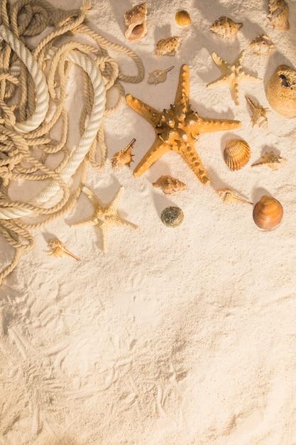 ヒトデ腹足類の殻と砂の上のロープ 無料写真
