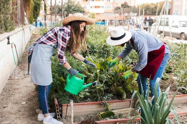 男性と女性の庭師トリミングと庭の植物の水やりのクローズアップ 無料写真