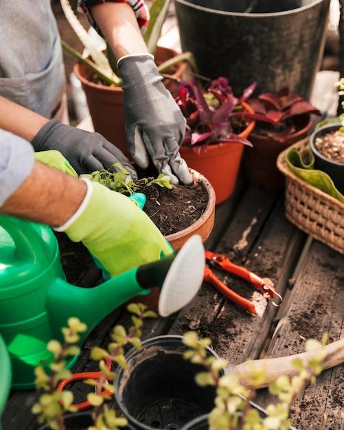 男性と女性の庭師、鍋に苗を植えること 無料写真