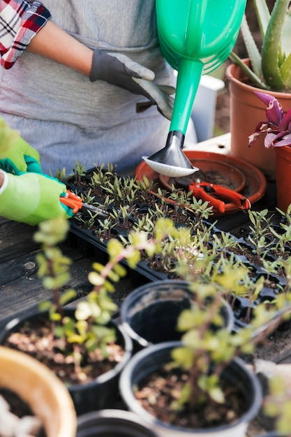 Портрет садовника полива и обрезки рассады в ящике Бесплатные Фотографии