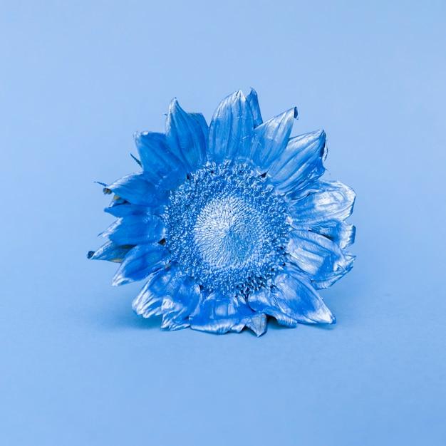 青いひまわり 無料写真
