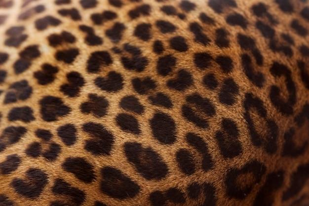 Леопард Бесплатные Фотографии