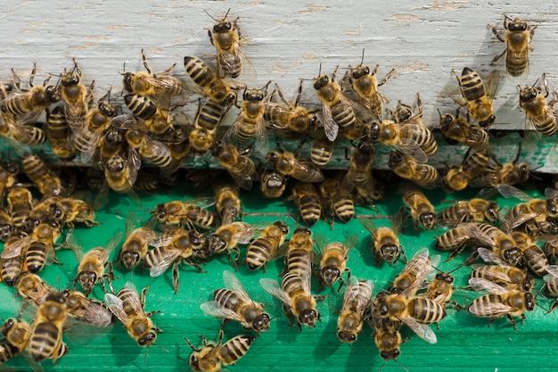 木の上の蜂 無料写真