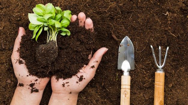 Вид сверху руки держат растение Бесплатные Фотографии