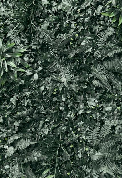 緑の植物のフルフレーム 無料写真