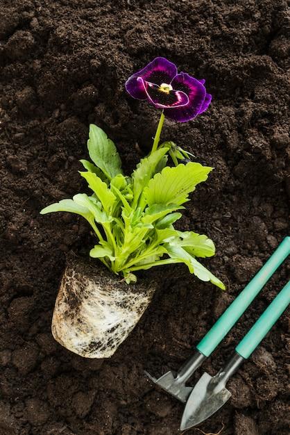 肥沃な土壌のパンジーの花植物と園芸用具 無料写真