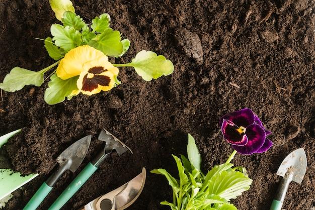 土壌の園芸工具を持つパンジー植物の俯瞰 無料写真
