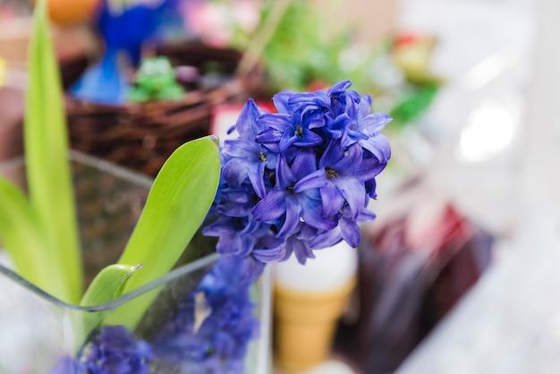 ガラスのヒヤシンスの花植物のクローズアップ 無料写真