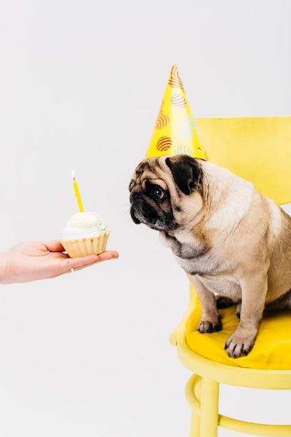 椅子に座って、ケーキを見て誕生日帽子の犬 無料写真