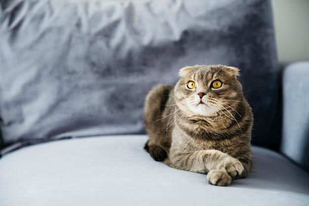 ソファの上に横たわる猫 無料写真