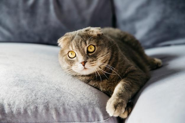 猫がソファーで休んで 無料写真