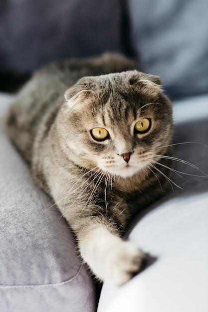 かわいい猫がソファに横になっています。 無料写真