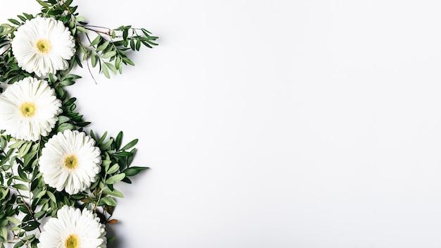 白いヒナギクの平面図 無料写真