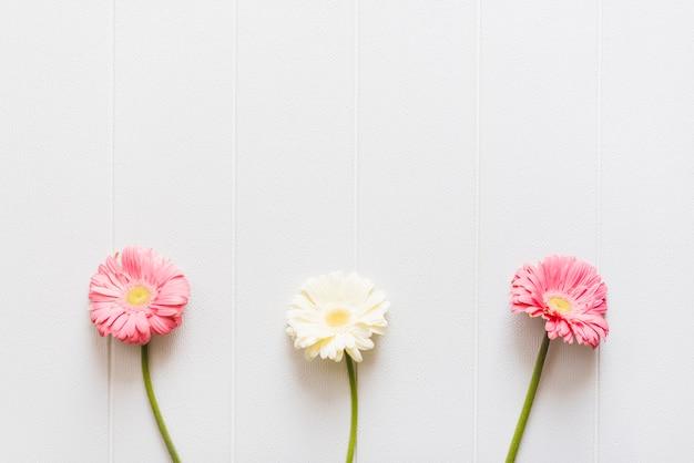 背景に装飾的なカラフルなデイジーの花 無料写真