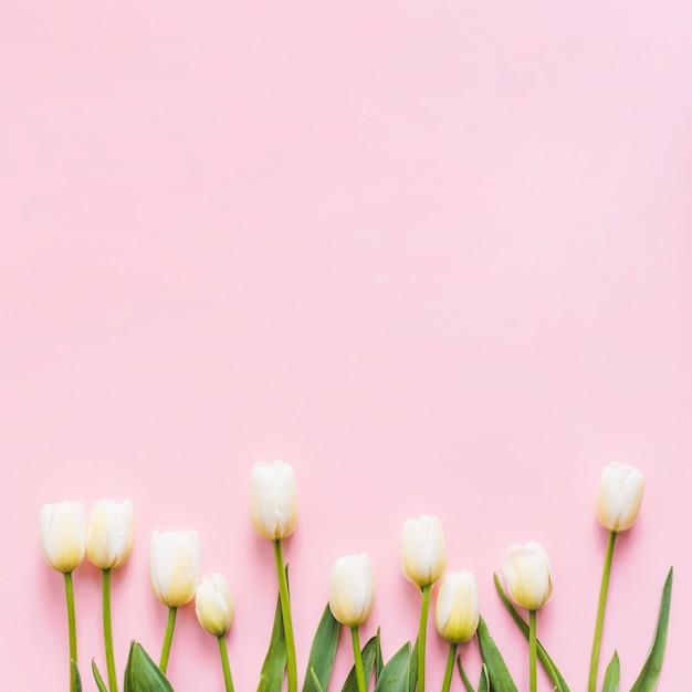 カラフルな背景に装飾的なチューリップの花 無料写真