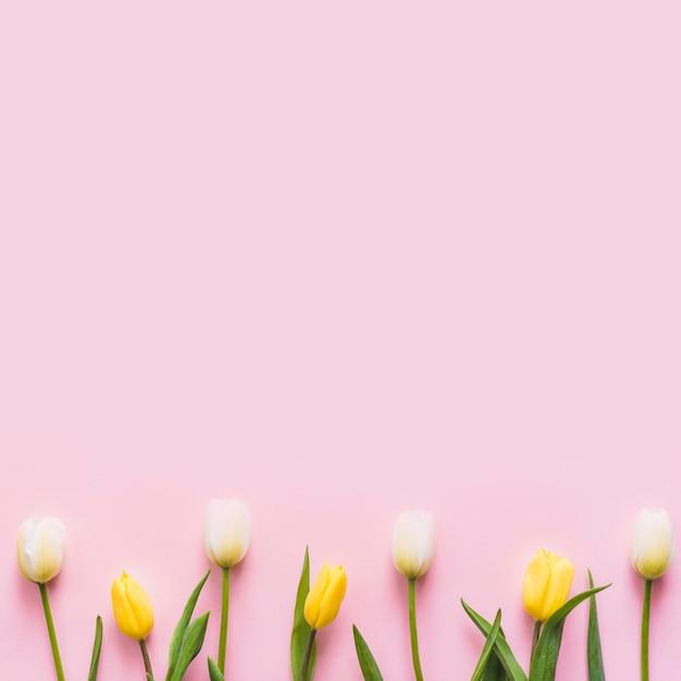 背景に装飾的なカラフルなチューリップの花 無料写真