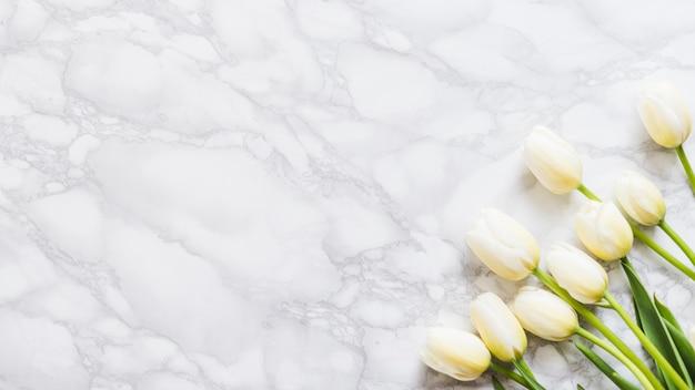 Декоративные тюльпаны на цветном фоне Бесплатные Фотографии
