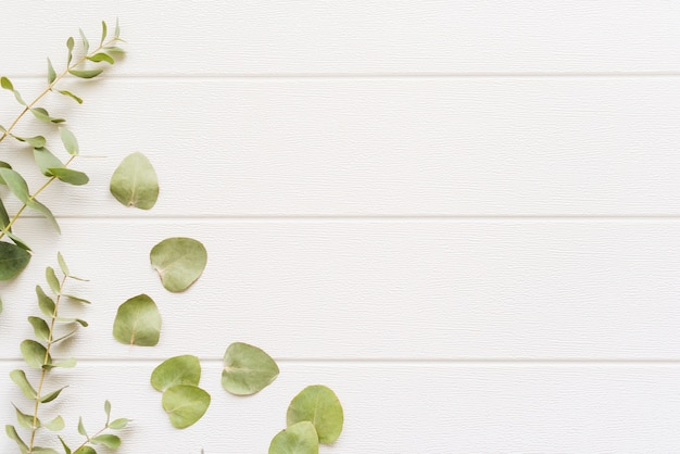 背景に装飾的な植物 無料写真