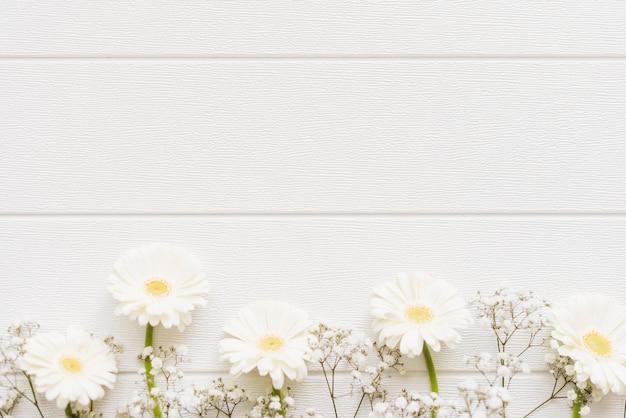 Декоративные красочные цветы ромашки на фоне Бесплатные Фотографии