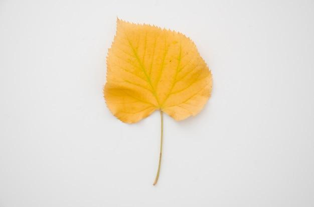 トップビュー黄色秋葉 無料写真