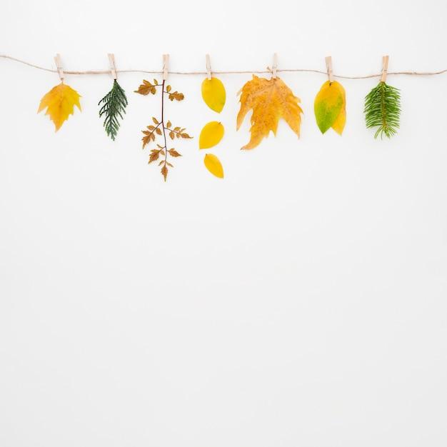 秋の紅葉フラットコピースペース 無料写真