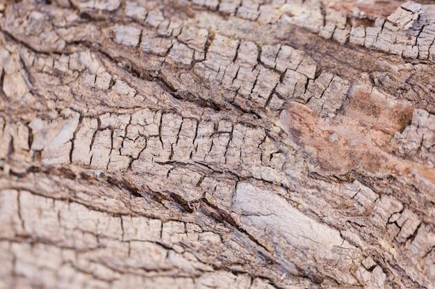 クローズアップの木の質感 無料写真