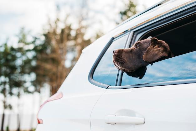 車の中で大きな黒い犬 無料写真