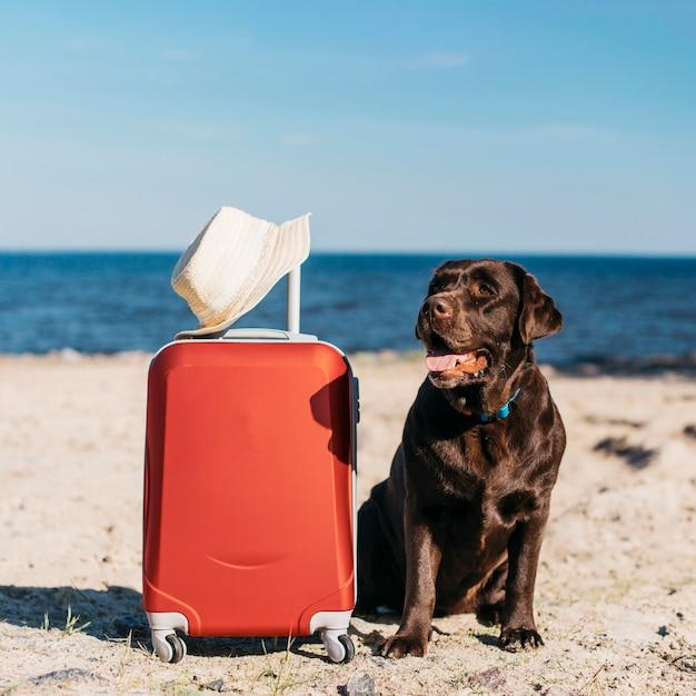 Черная собака с удовольствием на пляже Бесплатные Фотографии