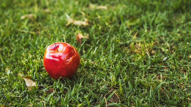 緑の芝生の上の赤いリンゴ 無料写真