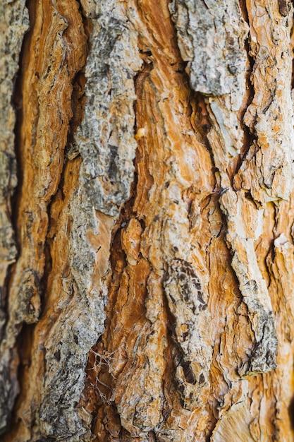 古い木の樹皮の質感 無料写真